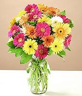 Ankara Sincan yurtiçi ve yurtdışı çiçek siparişi  17 adet karisik gerbera