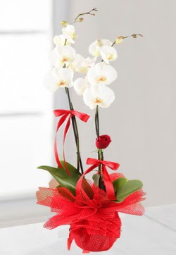 2 dallı beyaz orkide ve 1 adet kırmızı gül  Ankara Sincan kaliteli taze ve ucuz çiçekler