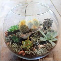 Cam fanusta 7 kaktüslü terrarium  Ankara Sincan çiçek siparişi vermek