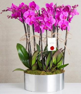 11 dallı mor orkide metal vazoda  Ankara Sincan çiçek , çiçekçi , çiçekçilik