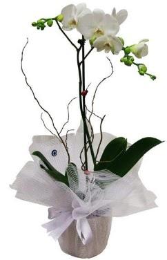 Tek dallı beyaz orkide  Ankara Sincan hediye sevgilime hediye çiçek