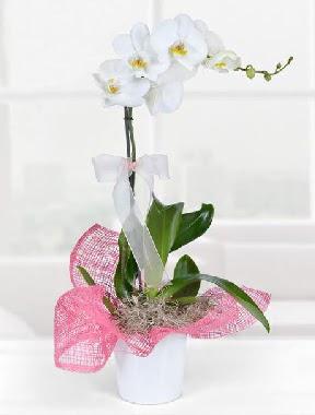 Tek dallı beyaz orkide seramik saksıda  Ankara Sincan hediye çiçek yolla