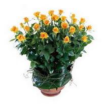 Ankara Sincan çiçek online çiçek siparişi  10 adet sari gül tanzim cam yada mika vazoda çiçek