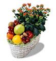 Online Ankara Sincan çiçek satışı  meyva sepeti ve kalanche