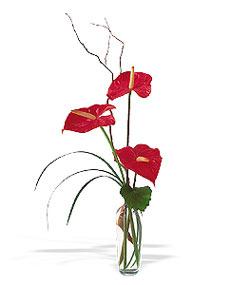 Ankara Sincan online çiçek gönderme sipariş  cam yada mika Vazoda 3 adet  antoryum