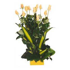 12 adet beyaz gül aranjmani  Ankara Sincan İnternetten çiçek siparişi