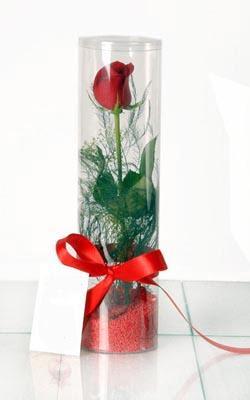 Ankara Sincan ucuz çiçek gönder  Silindir vazoda tek kirmizi gül