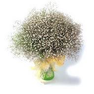 Ankara Sincan çiçek yolla , çiçek gönder , çiçekçi   cam yada mika vazo içerisinde cipsofilya demeti