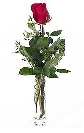 Vazo içerisinde 1 adet kirmizi gül  Ankara Sincan çiçek online çiçek siparişi