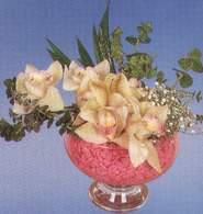 Ankara Sincan çiçek yolla , çiçek gönder , çiçekçi   Dal orkide kalite bir hediye