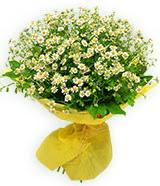 sadece papatya buketi  Çiçek siparişi Ankara Sincan anneler günü çiçek yolla