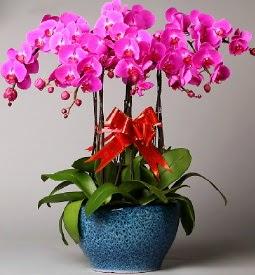 7 dallı mor orkide  Ankara Sincan yurtiçi ve yurtdışı çiçek siparişi
