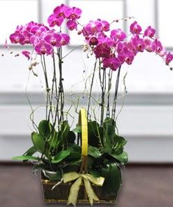 4 dallı mor orkide  Ankara Sincan çiçek gönderme sitemiz güvenlidir