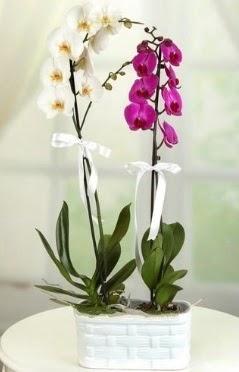 1 mor 1 dal beyaz İthal orkide sepet içerisinde  Ankara Sincan çiçek yolla , çiçek gönder , çiçekçi