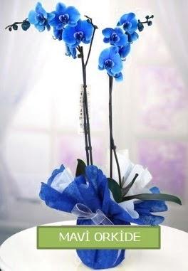 2 dallı mavi orkide  Ankara Sincan cicekciler , cicek siparisi