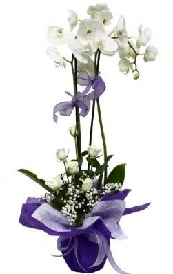2 dallı beyaz orkide 5 adet beyaz gül  Ankara Sincan çiçek siparişi vermek