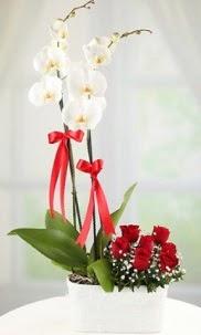 2 dallı beyaz orkide ve 7 kırmızı gül  Ankara Sincan internetten çiçek siparişi