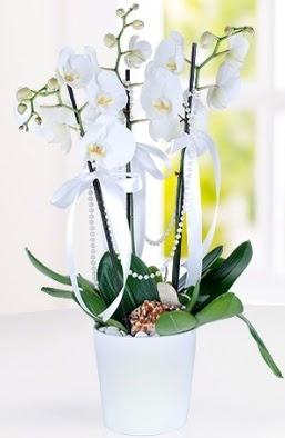 3 dallı beyaz orkide  Ankara Sincan ucuz çiçek gönder