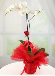 Tek dal beyaz orkide tek dal kırmızı gül  cicek siparisi Ankara Sincan cicek , cicekci