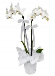 2 dallı beyaz orkide  Ankara Sincan çiçek gönderme sitemiz güvenlidir