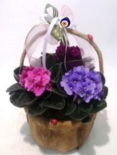 Sepet içerisinde 3 adet menekşe  Ankara Sincan kaliteli taze ve ucuz çiçekler