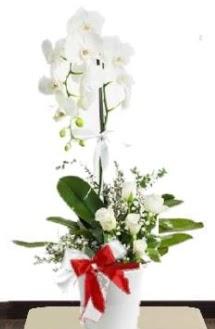 Tek dallı beyaz orkide 5 beyaz gül  Ankara Sincan online çiçek gönderme sipariş