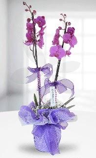 Çift dallı mor orkide LİKE MARKADIR  Ankara Sincan kaliteli taze ve ucuz çiçekler