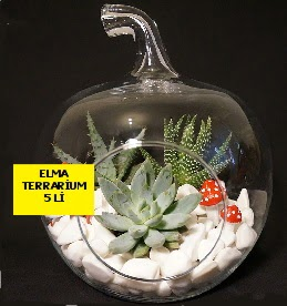 5 kaktüslü Elma terrarium orta boy  Çiçek siparişi Ankara Sincan anneler günü çiçek yolla