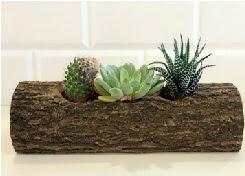 Ahşap kütük 3 kaktüs terrarium  Ankara Sincan internetten çiçek siparişi