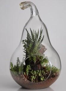 Armut cam küçük boy terrarium  Ankara Sincan online çiçekçi , çiçek siparişi