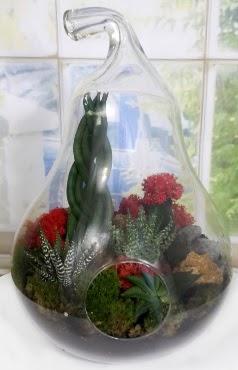 5 adet kaktüs orta boy armut terrarium  Ankara Sincan online çiçek gönderme sipariş