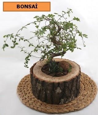 Doğal ağaç kütük içerisinde bonsai bitkisi  Ankara Sincan çiçek , çiçekçi , çiçekçilik
