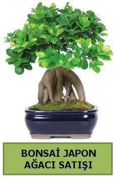 Bonsai japon ağacı satışı  Ankara Sincan çiçek siparişi sitesi