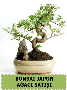 Bonsai japon  ağacı satışı Minyatür İthal  Ankara Sincan uluslararası çiçek gönderme