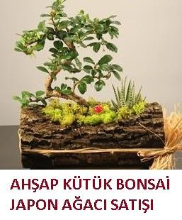 Ahşap kütük içerisinde bonsai ve 3 kaktüs  Ankara Sincan çiçek siparişi vermek