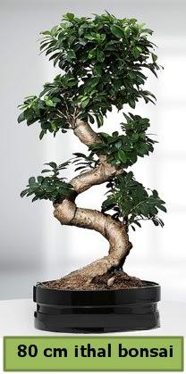 80 cm özel saksıda bonsai bitkisi  Ankara Sincan çiçekçi mağazası