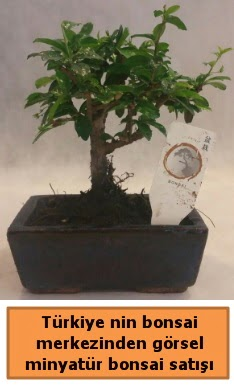 Japon ağacı bonsai satışı ithal görsel  Ankara Sincan ucuz çiçek gönder