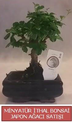Küçük görsel bonsai japon ağacı bitkisi  sincan çiçekçi Ankara Sincan internetten çiçek satışı
