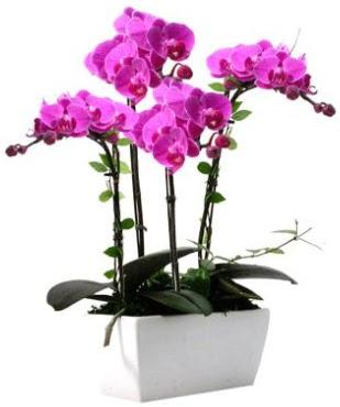 Seramik vazo içerisinde 4 dallı mor orkide  Ankara Sincan çiçek siparişi sitesi