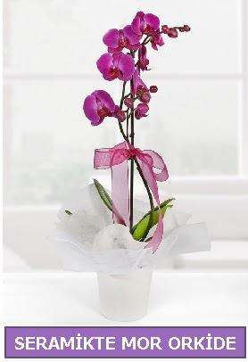 Seramik içerisinde birinci kalite tek dallı mor orkide  Online Ankara Sincan çiçek satışı
