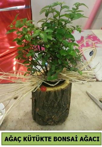 Doğal ağaç kütük içerisinde bonsai ağacı  Ankara Sincan çiçek , çiçekçi , çiçekçilik