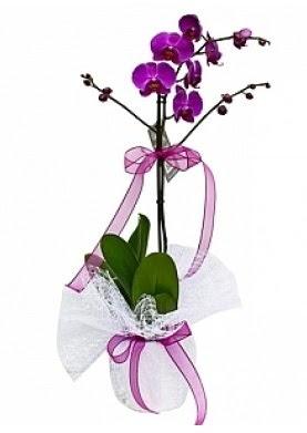 Tekli Mor Orkide  Ankara Sincan ucuz çiçek gönder