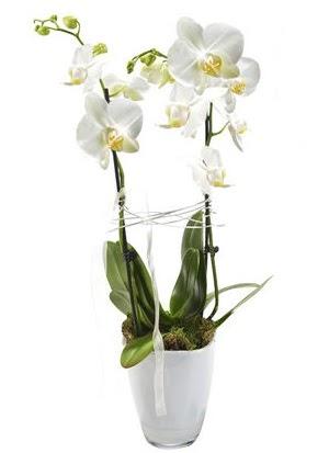 2 dallı beyaz seramik beyaz orkide saksısı  Ankara Sincan çiçek , çiçekçi , çiçekçilik