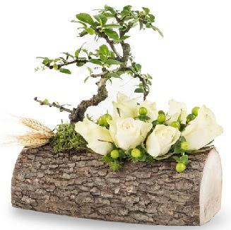 Doğal kütükte bonsai ağacı ve 7 beyaz gül  Ankara Sincan çiçek , çiçekçi , çiçekçilik