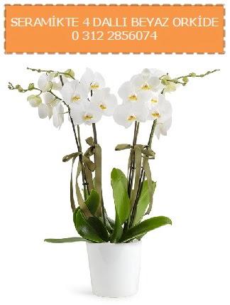 Seramikte 4 dallı beyaz orkide  Ankara Sincan cicekciler , cicek siparisi