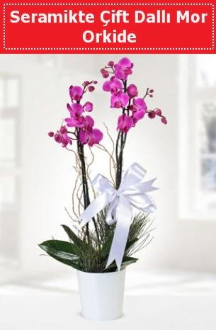 Seramikte Çift Dallı Mor Orkide  Ankara Sincan kaliteli taze ve ucuz çiçekler