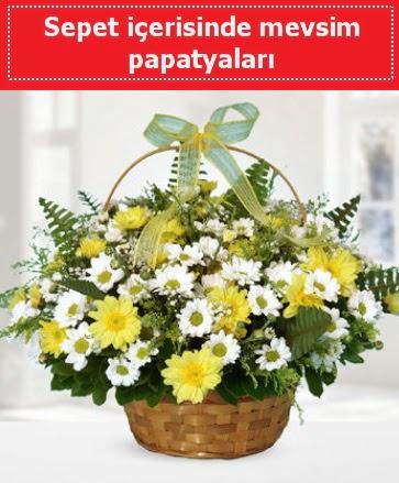 Sepet içerisinde mevsim papatyaları  Online Ankara Sincan çiçekçiler