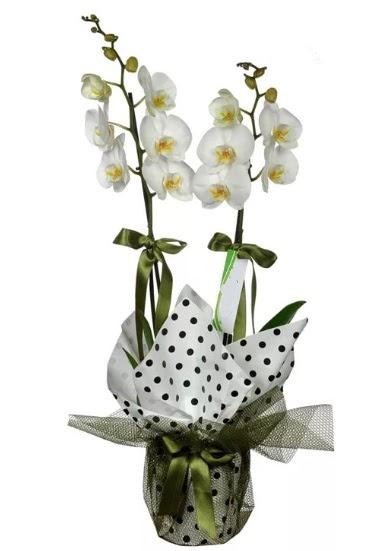 Çift Dallı Beyaz Orkide  Ankara Sincan çiçek mağazası , çiçekçi adresleri