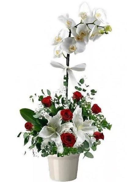 tek dallı beyaz orkide 7 gül ve 1 dal kazablanka